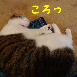 一日の疲れを癒してくれる猫