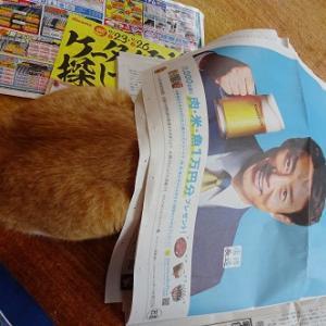 新聞を読ませない猫たち