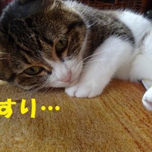 またたびに夢中な猫