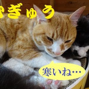 ぬくもりに包まれて眠る猫
