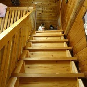 避難中の猫を狙う猫