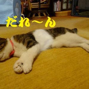 頭が空っぽな猫
