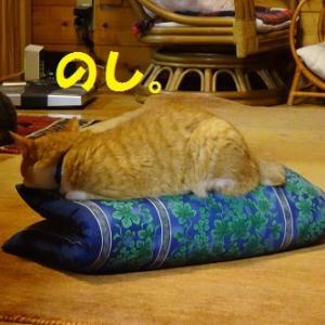 贅沢を覚えた猫