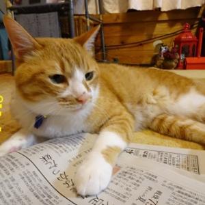 新聞大好き猫①