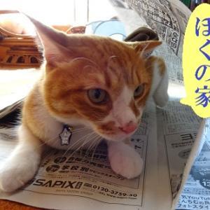 新聞大好き猫②