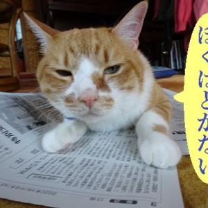新聞大好き猫③