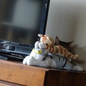 身をひそめる猫