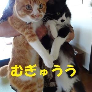 久々のツーショット猫
