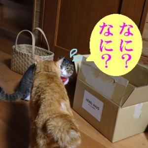狙われた猫①