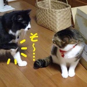 狙われた猫②