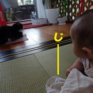 熱視線をあびる猫