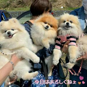 わんわんピクニック in 湘南 吾妻山