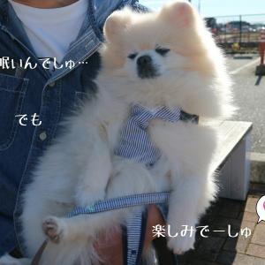 栃木旅1☆キャンカー仲間とRVパーク1日目