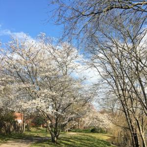春休み後のイロイロ