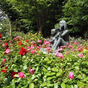 薔薇の花3