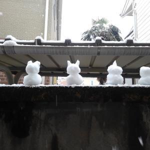 雪、ありがとう