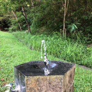 公園で水浴び