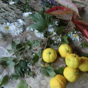 秋の庭の恵み