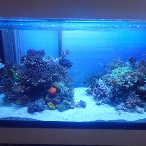 透視度が上がらない水槽と死にゆくサンゴたち