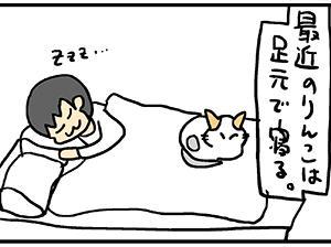 足元で寝たい。