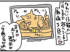 可愛く器用で一生懸命なデカい猫。