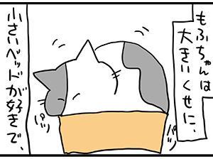 デカい猫。