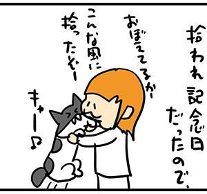 贅沢な猫ちゃんと不憫な猫ちゃん。