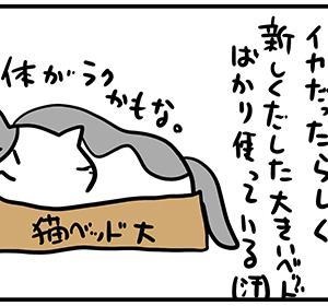 大きい猫ベッドを求めて。