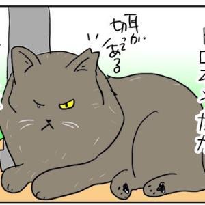 モフよりモフモフの野良猫さん。
