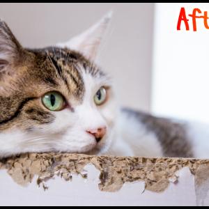 【レタッチ】猫写真のレタッチ作業動画。