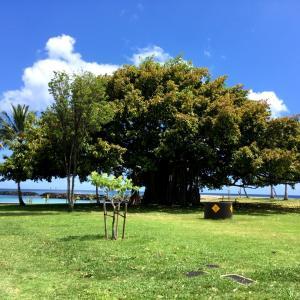 ハワイのホテル業界、観光再開の日に向けて&暑い日にありがたい、健康的なヒンヤリスイーツ♪