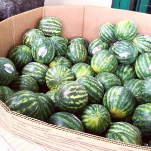 明日から、ハワイへの渡航・ハワイ州内の移動に関する規制内容が変わります&ハワイ産の果物♪