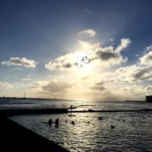 それにしてもすごい(汗)&冷静に見ないといけないハワイの新規感染者数&ネコちゃんを飼うことの効果