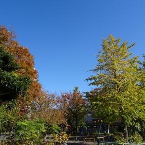 ロング散歩(11/21)