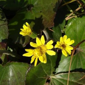 今日の黄色い花