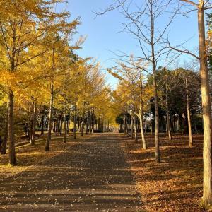 公園散歩の魅力です。の巻