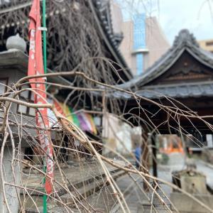 京都の日ですが!の巻