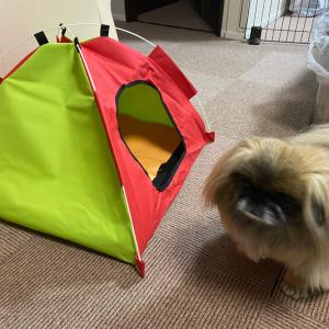 ふらちゃんのテントが来たよ~。の巻