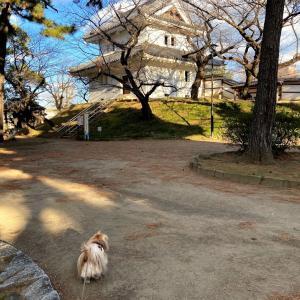 茨城良いとこその2亀城公園から水郷イルミネーションの巻