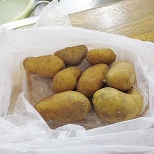 ホームで採れたじゃが芋を使ったカレー作り