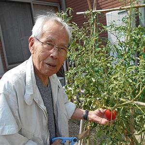 4月に植えていた夏野菜の収穫