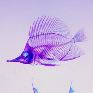 お魚の骨の世界を見てきた。