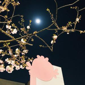 とても美しいスーパー・ピンク・ムーンに抱かれて
