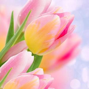 本日、「春分の日のメルマガ」を配信します!