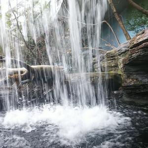 【アクアトトぎふ】地味な淡水魚に興味津々