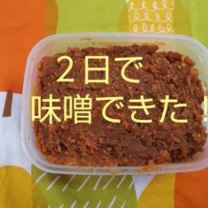 【夏の味噌作り②】2日で美味しくできちゃった!