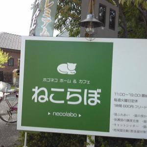 猫と遊べるカフェ『ねこらぼ』に行ってきました。