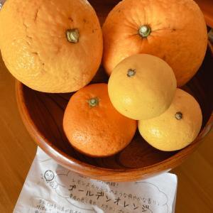 柑橘類のパートナー「ムッキーちゃん」