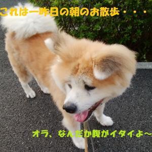 下痢ピー秋田ズ・・・><