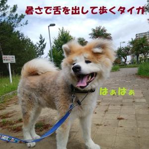 関東も梅雨入り!